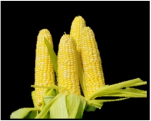 Remove the outer skin of corn